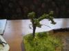 neuer Baum